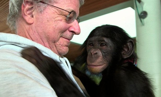 Animal rights lawyer Steven Wise of the Nonhuman Rights Project with Teko, a chimpanzee. Wise appears on Thursday before a state appeals court in Manhattan to argue for habeas corpus petitions for two chimpanzees being kept in New York. Photo courtesy of HBO.