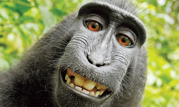 End of the Line for the 'Monkey Selfie' Case?