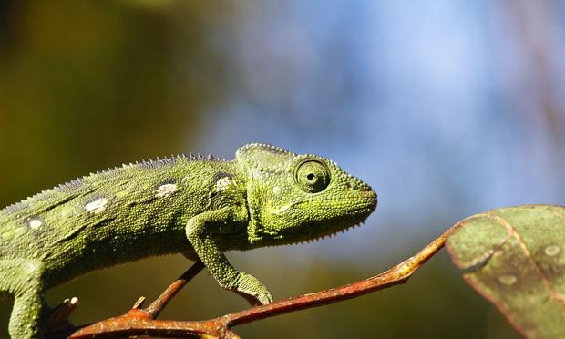 (Photo: Damian Ryszawy/Shutterstock.com)