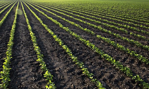 Soybean plants grow in a farm field outside Tiskilwa, Illinois, U.S., on Tuesday, July 2, 2019. President Donald Trumps $16 billion in additional trade-war aid for farmers appears to be paying off, as optimism rebounds in a key political constituency for his 2020 re-election bid. A gauge of agricultural sentiment sharply rebounded in June after a darkening mood on Americas farms throughout the spring amid a damaging trade war with China and relentless rain that restricted planting. Photographer: Daniel Acker/Bloomberg