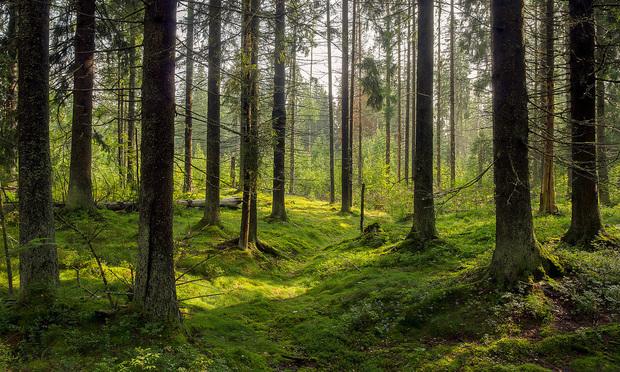 Swedish forest