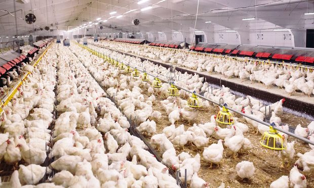 Chicken farm/Photo by David Tadevosian/Shutterstock.com
