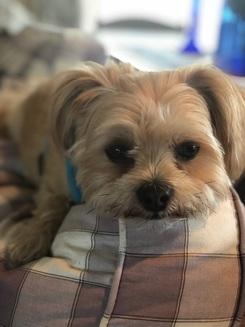dog custody