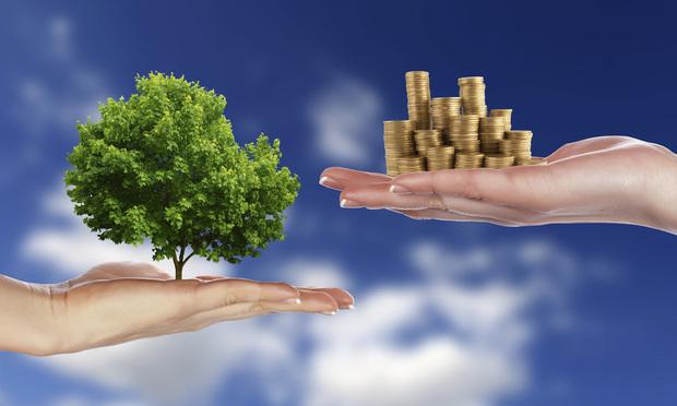 tree and money