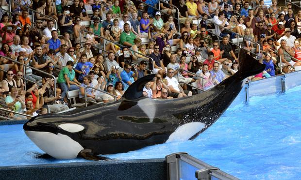 SeaWorld in Orlando. (Photo: Peter Etchells/Shutterstock.com)