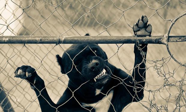 Vicious dog.