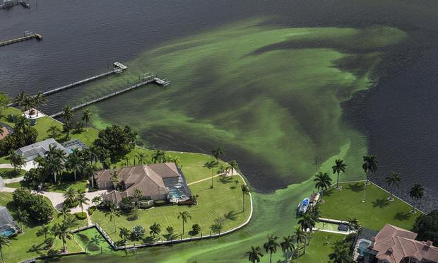 An aerial photo shows blue-green algae enveloping an area along the St. Lucie River in Stuart, Florida. (Greg Lovett/The Palm Beach Post via AP)