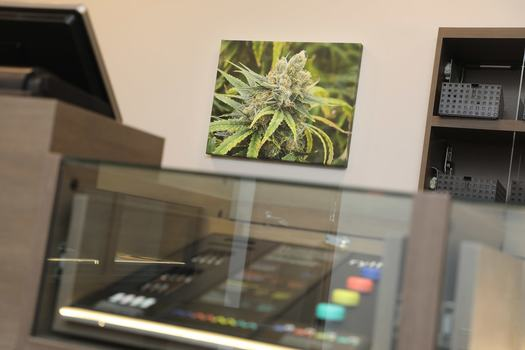 Medical Marijuana Dispensaries Compete for Restricted Retail