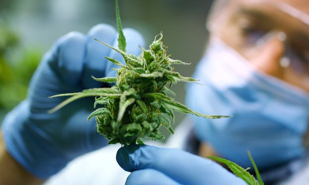 Florida Allowing 8 More Firms to Get Medical Pot Licenses