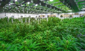Miami's Ladenburg Thalmann Finances 141M Cannabis Real Estate Offering