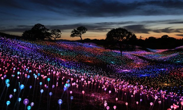 Field of Light, by Bruce Munro in Paso Robles, California.
