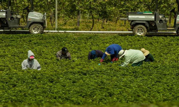 Workers work in the fields in New York state on a hot summer's day. Photo by J.Robert Williams/Shutterstock.com