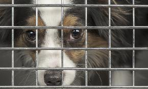 NJSPCA Subject to Open Records Law NJ Court Rules