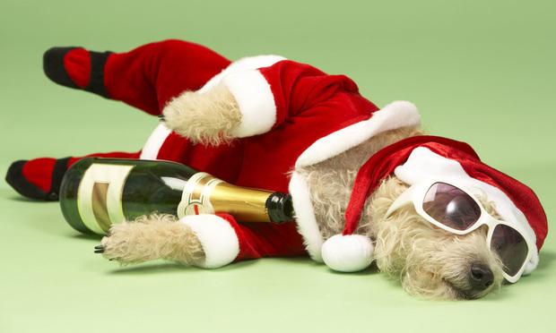 Samll Dog In Santa Costume
