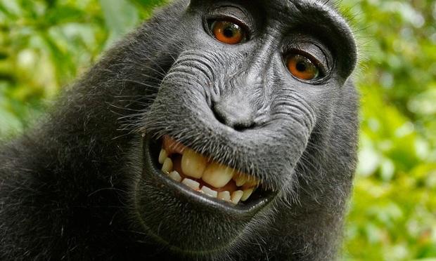 Judge: Monkey Can't Sue Over Selfie