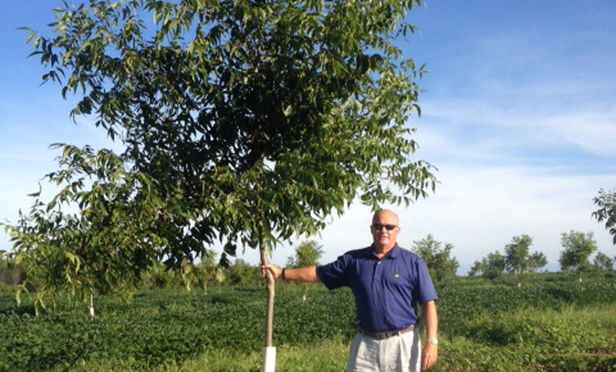 Dwight Davis with one of his pecan trees. He's aiming to sell primarily to the Chinese market.