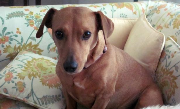 Lawyers's Suit over Dog's Death Survives Dismissal Motion