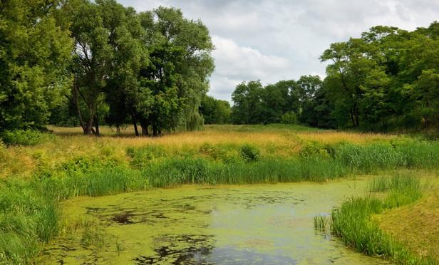 Legionella Risks in Building Water Systems