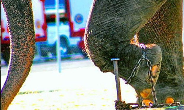 A photo from the Ringling Brothers litigation and trial